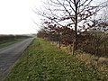 Drive to Lower Whitley Farm - geograph.org.uk - 637510.jpg