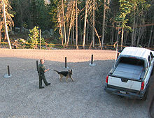 Working dog - Wikipedia, the free encyclopedia