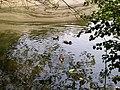 Duck pond, Hampstead Heath NW3 - geograph.org.uk - 1305398.jpg