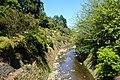 Dunedin Botanic Garden kz10.jpg