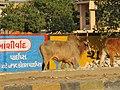 Dwaraka and around - during Dwaraka DWARASPDB 2015 (197).jpg