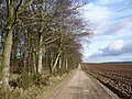 Earth and chalk track to Jackson and St Hilda's Wold - geograph.org.uk - 1179035.jpg