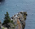 East Coast Trail (30170279788).jpg