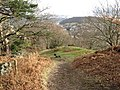 Edge of Coed Fridd - geograph.org.uk - 1150385.jpg