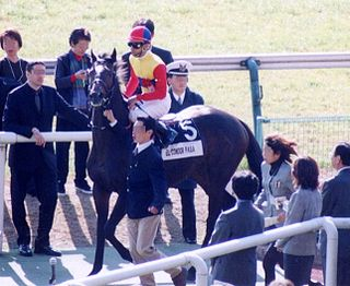El Condor Pasa (horse) American-bred Thoroughbred racehorse