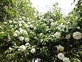 El Jardín De Eva (64150385).jpeg