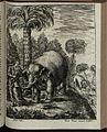 Elephantographia Curiosa 263.jpg