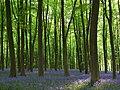 Embley Wood - geograph.org.uk - 800647.jpg