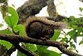Esquilo do parque da ferradura.jpg