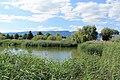 Estavayer-le-Lac - panoramio (174).jpg