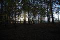 Evening Sun (1970419829).jpg