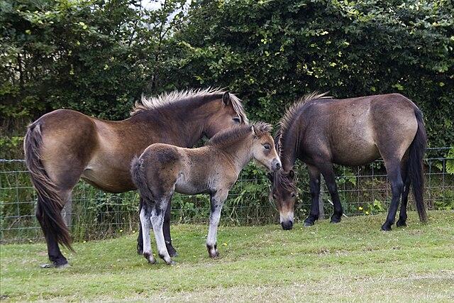 Pony Bit eBay