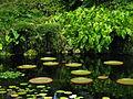 Fairchild Tropical Botanic Garden, Miami.jpg