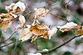 Fall Leaves (140455677).jpeg