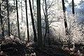 Fans Loanend Wood in winter - geograph.org.uk - 640756.jpg
