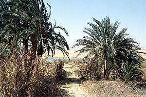Blick auf die Quelle ʿAin Bilād