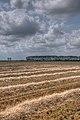Farmland - Crevalcore (BO) Italy - June 26, 2012 - panoramio.jpg