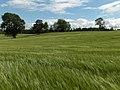 Farmland east of Muthill - geograph.org.uk - 199856.jpg