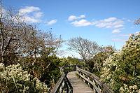 Wooden walkway between trees