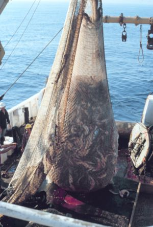 Trawl net with fish