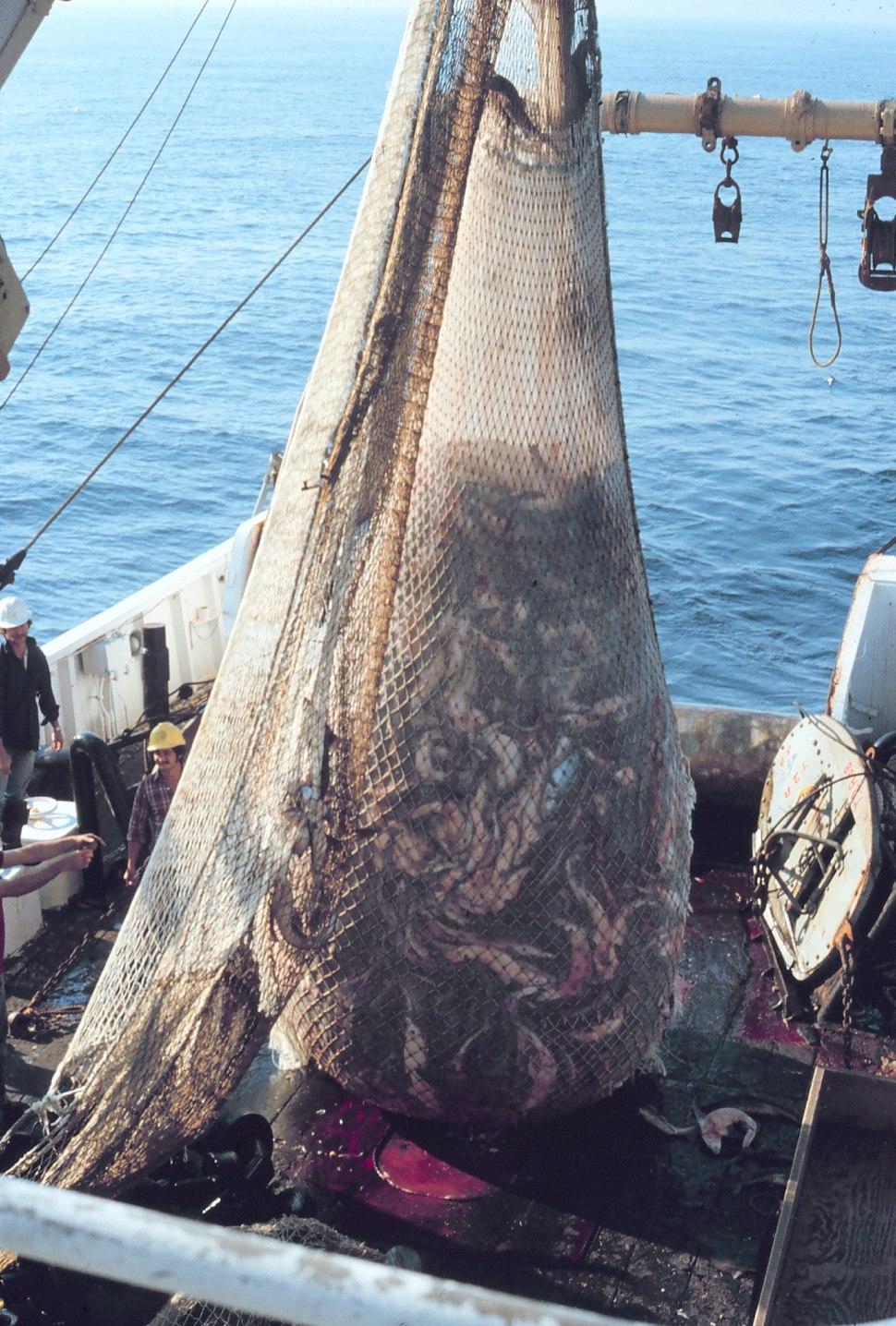 Fish on Trawler