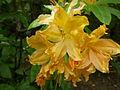 Fleur orange.JPG