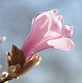 Flickr - Michael Gwyther-Jones - Spring.jpg