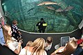 Flickr - Official U.S. Navy Imagery - A Navy diver interacts with children..jpg