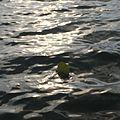 Float!.jpg