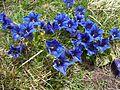 Flora Appennino Tosco Emiliano 002.JPG
