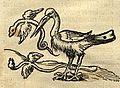 Flying snakes from Africa (1550).jpg