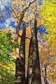 Foliage Walk (6) (29718926673).jpg