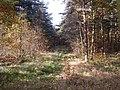 Footpath in Bullcliff Wood, West Bretton CP - geograph.org.uk - 280887.jpg