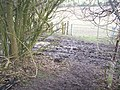 Footpath meets byway in White Horse Wood - geograph.org.uk - 1178730.jpg