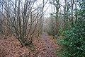 Footpath through Brotherhood Wood - geograph.org.uk - 1132167.jpg