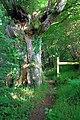 Footpath to Pont-rhyd-goch - geograph.org.uk - 1383560.jpg