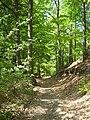 Forest, CHKO Kokořínsko3.jpg