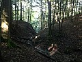 Forest (48966621261).jpg