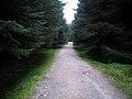 Forest Track Near Ardgartan - geograph.org.uk - 1284483.jpg