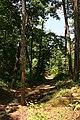 Forest Wayfinding (18882305924).jpg