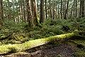 Forest in Yatsugatake 53.jpg