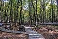 Forest of Gabala 3.jpg