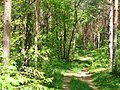 Forst Potsdam - Waldweg - geo.hlipp.de - 37839.jpg
