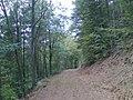 Forstweg im Dahner Felsenland - geo.hlipp.de - 22121.jpg