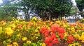 Foto das plantas e das flores UFSC.jpg