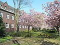 Frühling in der Mühlentorstraße Lingen 2.jpg