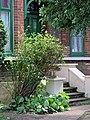 Front garden steps, Chingford Mount Road, London Borough of Waltham Forest, England.jpg