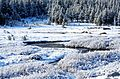 Frosted Meadow, Yosemite NP 5-20-15 (17583891853).jpg