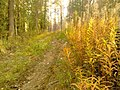 G. Novouralsk, Sverdlovskaya oblast', Russia - panoramio (152).jpg