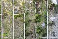 Gabion terre pierre Citadelle Lille biodiversité 2016 Lamiot a 3.JPG